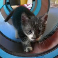 Ebon mačička