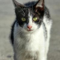 krásne čierne mačička pics