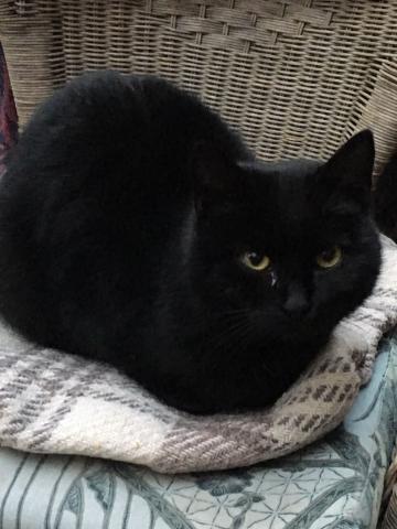 Čierna mačička 2