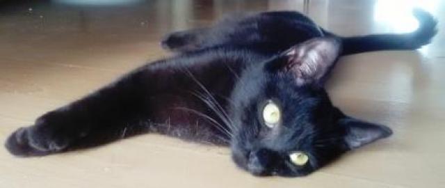 čierny dospelý mačička dievča striekať z mačička