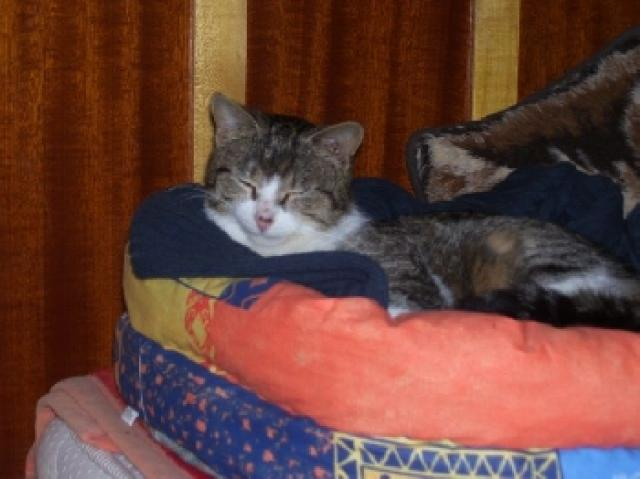 Súvisiace obrázky: mačiatko mačka domáce zviera roztomilé mačky zviera.