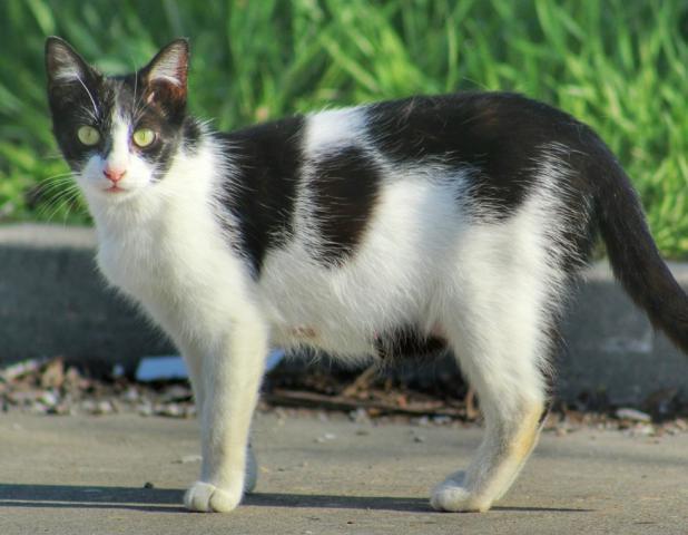 Mačička gallory