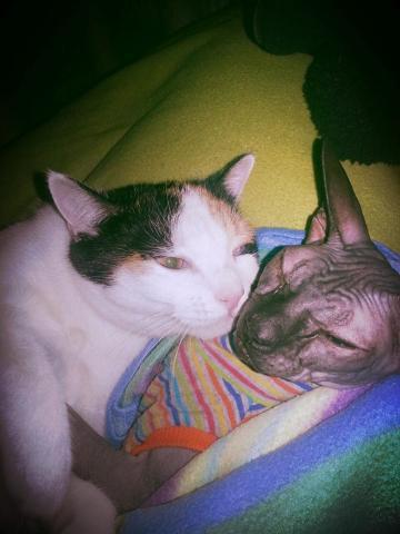 Chlpaté mačička dievčatá com
