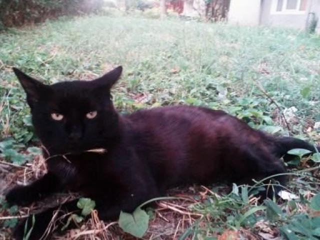 Miestne mačička pics